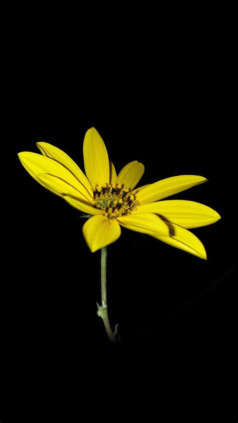 flower yellow nature art dark minimal simple papersco