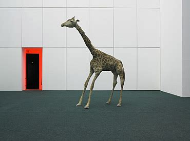 deutsche bank zoo db artmag all the news on deutsche bank db artmag