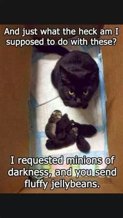 Top Ten Funniest Memes - top 30 funny cat memes quotes words sayings
