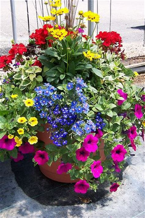 container garden need this for my patio planter good