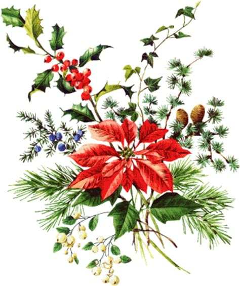 imagenes flores de navidad 174 colecci 243 n de gifs 174 im 193 genes de flores de navidad
