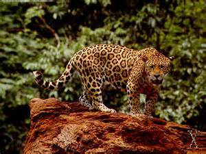 When Did Jaguar Start Jaguar Related Images Start 0 Weili Automotive Network