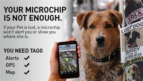 gps microchip for dogs your microchip is not enough tagg uses gps and can track you the tagg system is