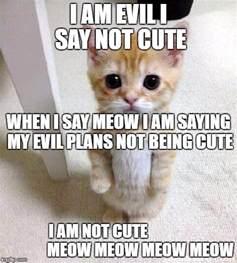 Cute Cat Memes - cute cat memes imgflip