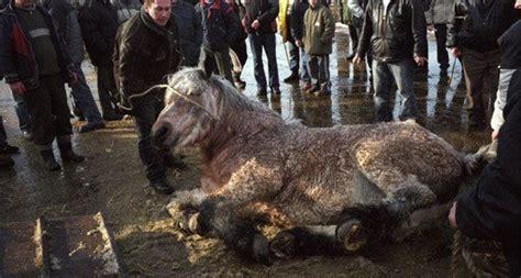 Aufkleber Drucken Celle by Stoppt Den Grausamen Pferdemarkt In Skaryszew Polen