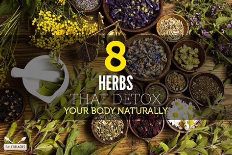 Paleo Hacks Detox by 8 Herbs That Detox Your Naturally