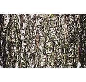 Tree Bark Wallpapers Gallery 77 Plus  Juegosrevcom