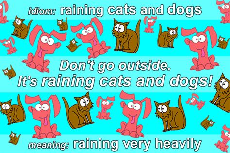 raining cats and dogs meaning idiom raining cats and dogs funky