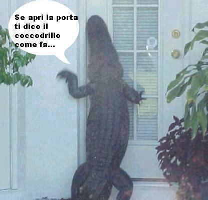 fuori dalla porta barzellette net foto coccodrillo enorme fuori dalla porta
