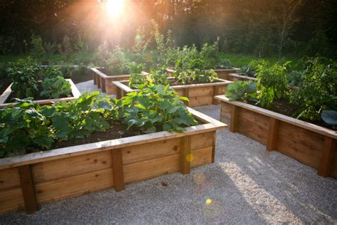 Tips For A Raised Bed Vegetable Garden The Garden Treated Pine Vegetable Garden