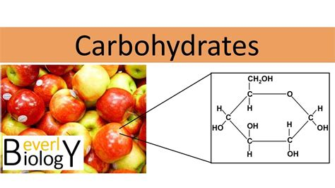 carbohydrates biology carbohydrates honors biology
