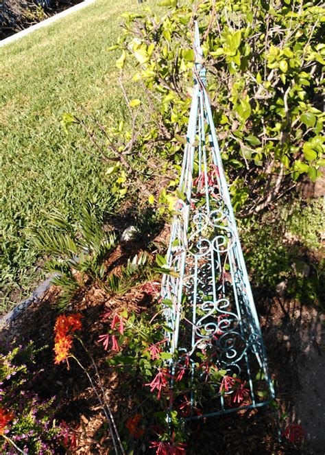 Metal Plant Trellis Small Metal Scroll Garden Plant Trellis