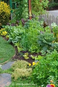 edible landscape groenten groeien pinterest
