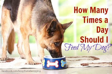 how many times should i feed my puppy how many times a day should i feed my keep the wagging