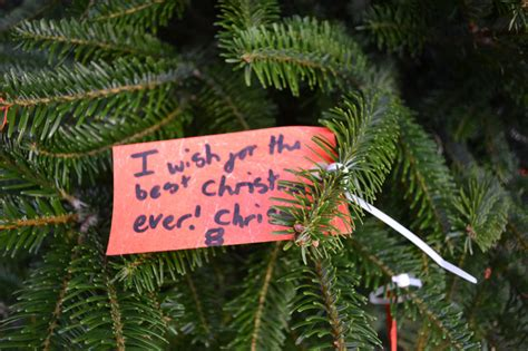 where to buy christmas trees in southwest london