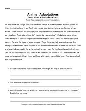 Animal Adaptation Worksheets by Animal Adaptations Comprehension