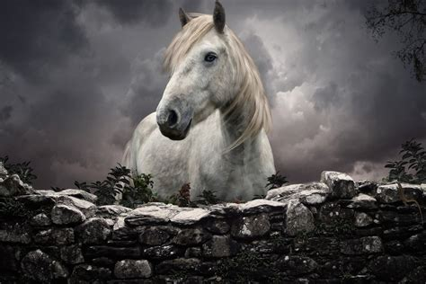 caballo cogida brutal por detras caballo blanco detr 225 s de una cerca 73211