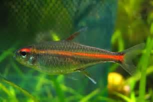 Tropical   Fish   Pet Info Club