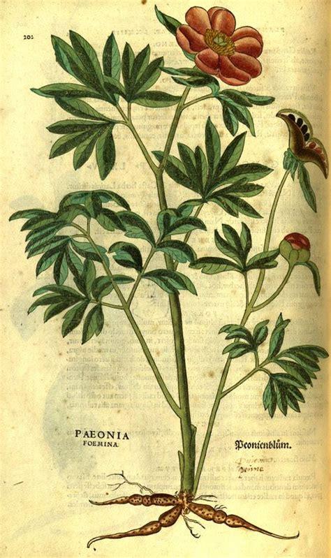 libro leonhart fuchs the new 47 best naturalists fuchs leonhart 1501 1566 wemding 17 gennaio 1501 tubinga 10 maggio