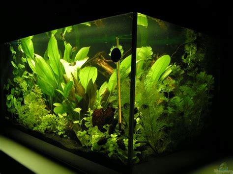 Aqua Gizi By Chapoenx Aquarium aquarium peggy kizi aqua