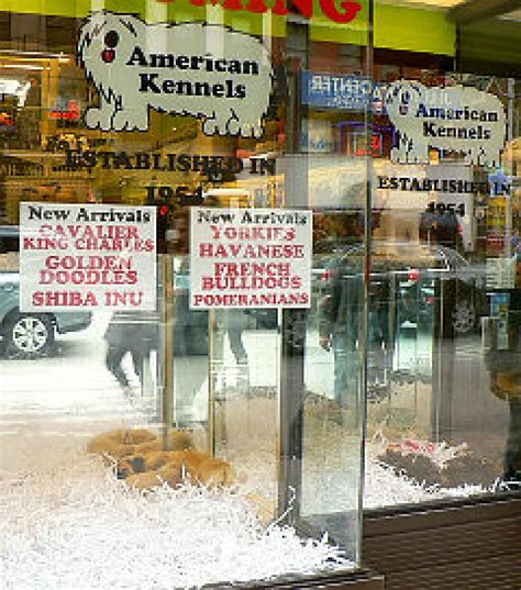 puppy stores in ny fighting deadly puppy mills ny daily news