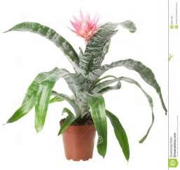 plante d int 233 rieur avec la fleur d isolement sur le