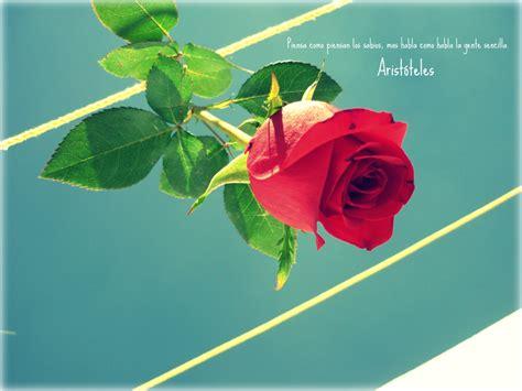 frases de rosas frasesypensamientoscomar flores y frases by guzinanda on deviantart