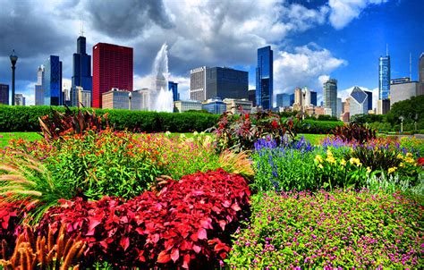 chicago n flowers by emily stauring