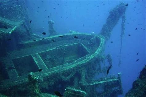 zenobia dive 17 scuba diving locations nerve