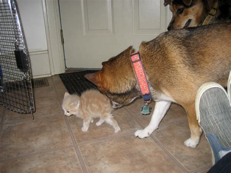 dogs and cats living together mass hysteria dogs and cats living together mass hysteria flickr photo