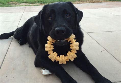 best chew toys for dogs best chew toys for dogs 2017 reviews top picks s health