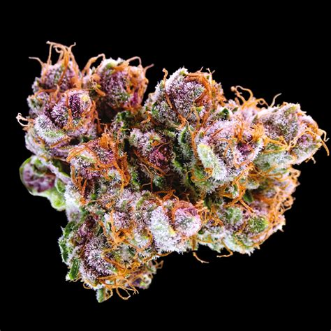 black strain black cherry soda strain information marijuana