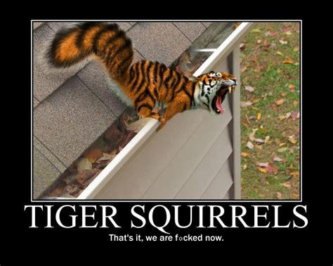 Funny Tiger Memes - funny tiger squirrels meme shareology
