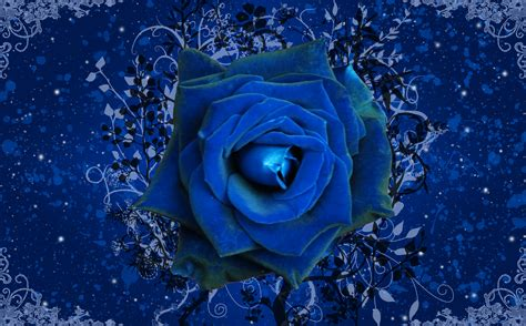 blue wallpaper pink roses blue rose wallpaper rose wallpaper