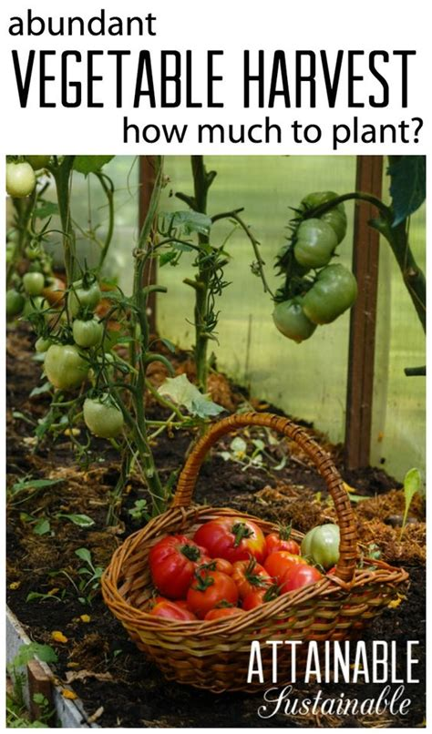 When Should I Plant A Vegetable Garden Growing A Garden How Much Of Each Vegetable Should You Plant