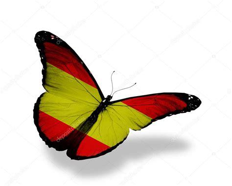 mariposas de espaa y mariposa bandera espa 241 ola volar aislado sobre fondo blanco foto de stock 169 sun tiger 10945023