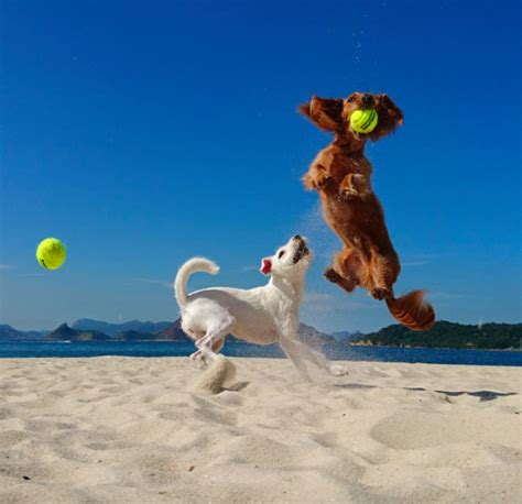 when is international puppy day explore international day today s homepage