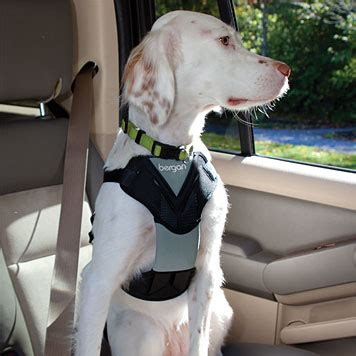 car harness for dogs car harness for dogs safety harness orvis