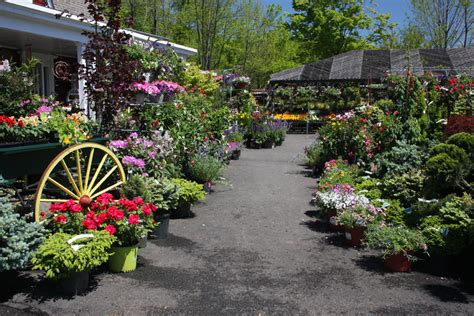 Garden Center Nursery Hickory Hollow Nursery And Garden Center A Plant And
