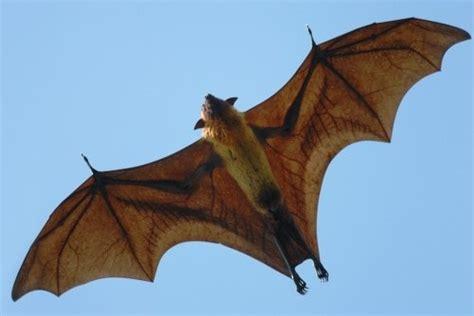 is a bat a bird or a mammal birds of prey