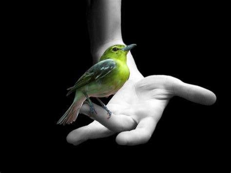 beautiful small birds wallpapers entertainment only latest small birds wallpapers entertainment only