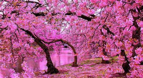 wallpaper pemandangan alam jepang kumpulan keindahan pemandangan alam yang elok 9katalucu