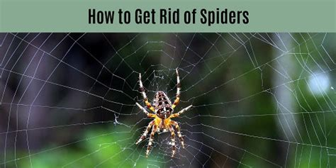 how to get rid of spiders in the house how to get rid of spiders inside and outside the house