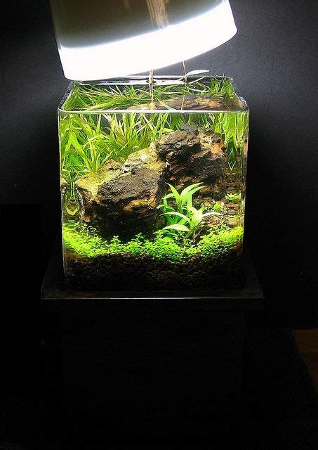 membuat aquascape nano tank 167 best planted nano aquariums images on pinterest