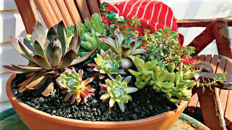 Best Planters For Succulents by How To Plant Succulents In Containers Southern Living