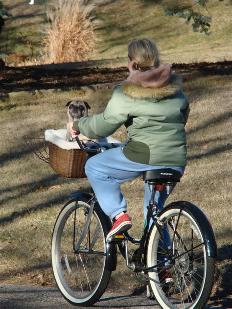 pug bike 17 best images about unlimited biking pug picks on bike baskets bike