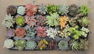 why you should a succulent in your