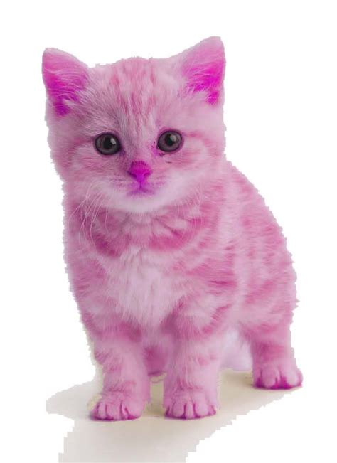 pink kitten   goodness  cute funny cats