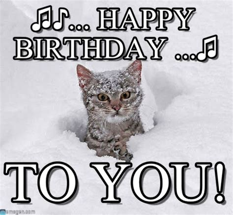 Happy Birthday Cat Meme - happy birthday cat in snow meme on memegen