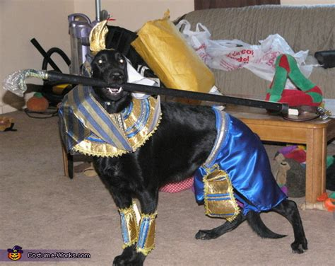 anubis egyptian dog god costume